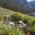 Wildflowers choke a steep creek that crosses the trail at 7,000 feet.- Groves, riots, and Sundry Summer Flora Assemblies