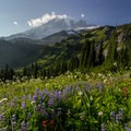 Mist reflects off afternoon light above a full garden near the southeast section of the loop- Skyline Trail Hike
