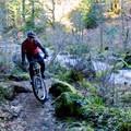 A mountain biker navigates the Mckenzie River Trail.- Oregon Fall Adventures