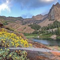 The last of the wildflowers still growing mid-August at Lake Blanche.- Incredible Hikes for Alpine Wildflowers