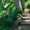 The well-maintained trail starts steep, and steps test your calves as you climb a 900-foot elevation gain over the first mile.- One weekend, Three Seattle Hikes