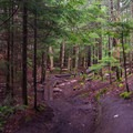 Planks to help avoid mud and keep hikers on the trail up Mount Jo.- Incredible Adirondack Hikes Below 4,000 Feet