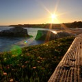 Natural Bridges State Beach claims to be a layover for migratory monarch butterflies.- 10 Reasons to Adventure in Southern California in the Winter
