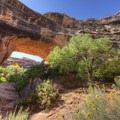 Natural Bridges National Monument.- Breathtaking Cliffside Vistas