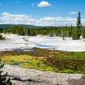 This spot of vegetation has survived so far, but it is in danger as the soil acidifies.- Norris Geyser Basin