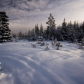 The scrub alpine forest along the road between Benson Snow Park and Big Lake.- The Best Snowshoeing Near Bend, Oregon