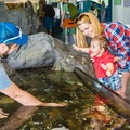 The Seacoast Science Center within Odiorne State Park is a great place for kids to learn about the wildlife that lives in the Atlantic Ocean.- 3-Day Itinerary for Portsmouth, New Hampshire
