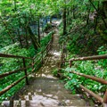 Stairs down to a landing near Jackson Falls.- 10 Must-Do Hikes Near Nashville, Tennessee