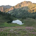 Wildflowers blanket the fields above Heart Lake on the High Divide Trail.- Incredible Hikes for Alpine Wildflowers