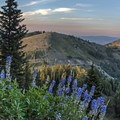 We found some late season lupine, some of the last of the year.- 6 Days of Adventure in Utah's Wasatch Mountains