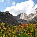 Alpine sunflower and Indian paintbrush flower in the Cirque of the Towers.- Groves, riots, and Sundry Summer Flora Assemblies
