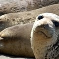 Seals along the Long Coast Trail- Best Hikes on the Northern California Coast