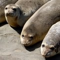 Seals are a common sight along the Lost Coast Trail.- Last-Minute Spring Break Ideas