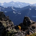 Obstruction Point: A view from the ridge.- 20 Incredible Adventures on the Olympic Peninsula