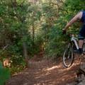 Bennie Creek: Rock drop on a corner.- Salt Lake City's 17 Best Mountain Bike Rides