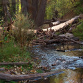 Wardsworth Creek runs next to the trail.- Salt Lake City's 17 Best Mountain Bike Rides
