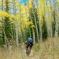 Desolation Lake: Dropping back into the aspens.- Salt Lake City's 17 Best Mountain Bike Rides
