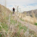 Descending past wildflowers on the Bonneville Shoreline Trail.- Wildflower Hikes Near Salt Lake City, Utah
