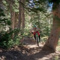 Flying through the pines.- Making Headway on the Wasatch's Mountain Accord