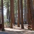 Pine forest camping right next to Lake Tahoe at Nevada Beach Campground.- Adventuring across Nevada's Highway 50