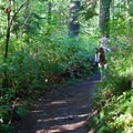 Horse-friendly trails in Paradise Conservation Area.- Seattle's Best Day Hikes