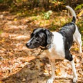 Hiking off leash is great, but voice control is imperative for the safety of the dog, local wildlife, and other hikers.- What You Need to Know Before Exploring Public Lands With Your Dog