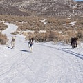 Round Valley is one of the few areas in the state where it is legal for dogs to roam off leash.- Unbeatable Winter Adventures in Utah