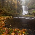 Fallen leaves provide a vibrant foreground to Middle North Falls.- Silver Falls, Trail of 10 Falls