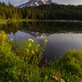 Flora lining the shores of Reflection Lake in the early morning.- Mount Rainier National Park