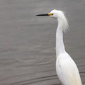 A snowy egret along the Creole Nature Trail.- 3-Day Itinerary for the Best of Louisiana's Outdoors