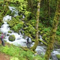 Ruckel Creek cascades through the undergrowth on the Ruckel Ridge Trail.- Hiking in the Columbia River Gorge