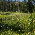 One of the many wildflower meadows along the trail.- Where to Hike In Utah's Uinta Mountains