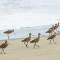 Beach at Elkhorn Slough.- Western Birding Hotspots