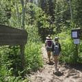Scout Falls, Timpooneke Trailhead. - Mount Timpanogos Wilderness