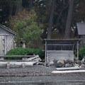 Houses near Friday Harbor on San Juan Island.- San Juan Islands