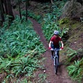 One of the smooth sections of Siltcoos Lake Trail.- 3-Day Itinerary For Florence, Oregon