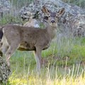 Say hi to some deer on your hike.- Educational Adventures the Whole Family Will Love