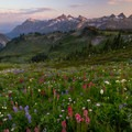 A thick patch of wildflowers below the Tatoosh Range.- Mount Rainier National Park