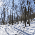 Stissing Fire Tower: Continuing up the northern mountain face.- Hudson Valley's 8 Best Snowshoe Adventures