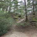 The Sutton Campground is adjacent to an area of partially forested dunes.- Oregon Dunes Restoration