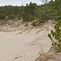 The Sutton Trails cross an area of forested dunes.- Oregon Dunes Restoration