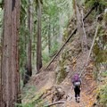 Hiking along the Pine Ridge Trail.- The Best of Big Sur: Hiking, Camping, Beaches, and Waterfalls