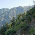 Canyon views from the trail to Sykes Hot Springs.- California's Best Backpacking Trips