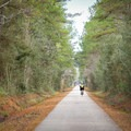 Cyclists along the 31-mile Tammany Trace rail trail.- Louisiana's Cypress and Sea