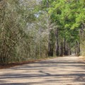 The southern portion of the Tammany Trace heads through forested bayou country along the northern shore of Lake Pontchatrain.- 5 Ways to Find Your Louisiana Adventure