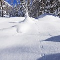 There is something magical about seeing critter tracks in the snow.- 5 Safe and Easy Ways to Enjoy Winter in the Wasatch