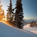 Wind blows loose snow through some isolated trees high in Paradise Park with the Tatoosh Range in the distance.- Mount Rainier National Park