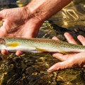 A small rainbow trout.- Getting Started With Fly Fishing