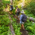 The lush forest along the Tenquille Creek Trail.- Tenquille Lake Hike via Tenquille Creek Trail