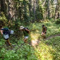 The trail is through forest most of the way.- Tenquille Lake Hike via Tenquille Creek Trail